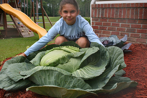 Amazing Katie Stagliano, age 10, and her 40-pounds cabbage that fed 275 people!