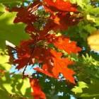 On an Autumn Wind