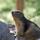 Groundhog Day – an Interesting Holiday that Predicts the Weather