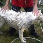 The Huskies' Shower