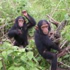 The Adventure in the Jungle