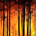Wildfire Tanka