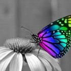 Wings of Success