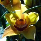 A Flower's Smile
