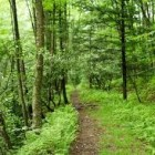 A Summer Hike