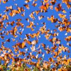 Insane, Psychopathic Butterflies