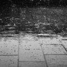 The Rain Wish