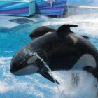 The Show Must Not Go On: Does SeaWorld Deserve to be Shut Down?