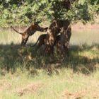Tree Hopping